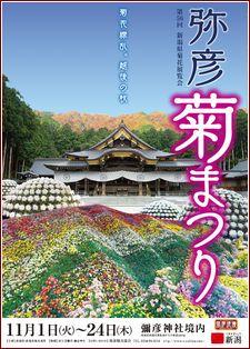 2016年弥彦菊まつり 日時 彌彦神社