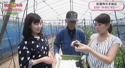 佐渡 幻の小木ビオレー 真っ黒いちじく BSN水曜見ナイト