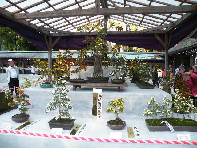彌彦神社 菊祭り 2017年11月 開催期間 場所・地図 オススメ紅葉