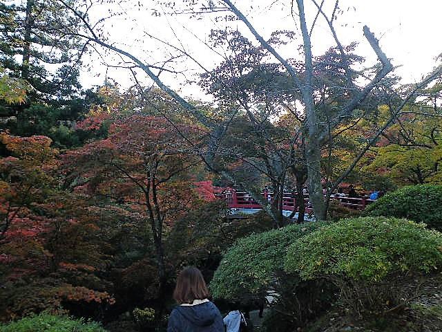 弥彦公園 紅葉 2017年 見ごろ