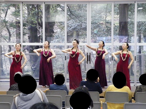弥彦村・桜まつり2018年 弥彦よさこい添弥、フラダンス