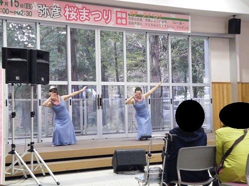 弥彦春の祭り2018年 桜