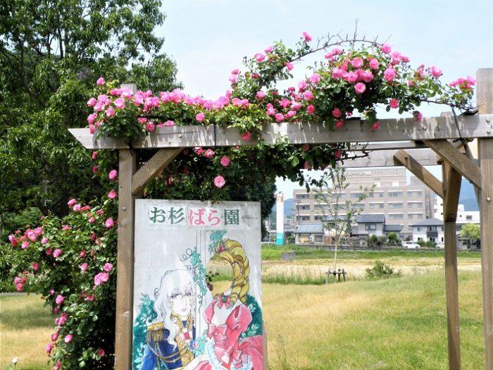 お杉ばら園 顔ハメ看板 新潟市岩室温泉 観光