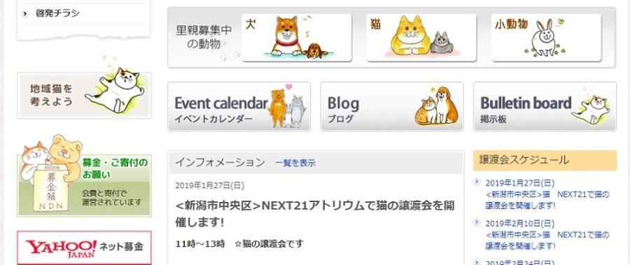 犬猫譲渡会 新潟動物ネットワーク ニュース・イベント 開催日時
