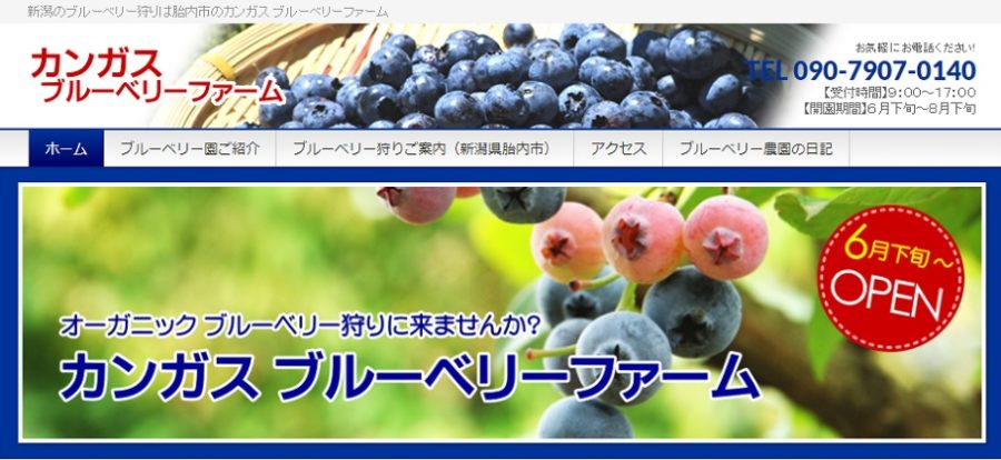 新潟県胎内市でブルーベリー狩りと食べ放題ができる農園の料金と場所はどこ?