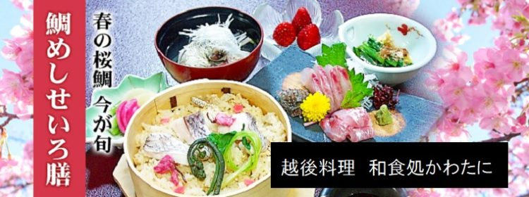 越後料理 和食処かわたに 新潟県柏崎市 桜鯛の鯛めしせいろ膳が人気