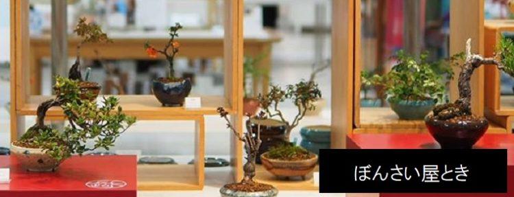 ぼんさい屋とき 新潟市江南区の小さな盆栽の販売・教室