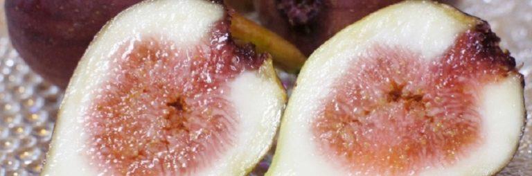 越の雫 新潟県産ブランドいちじく 糖度18度 例年以上の甘さ 出荷全盛期