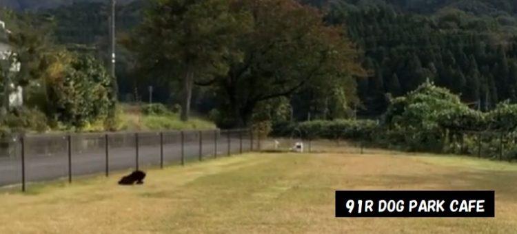 ドッグラン カフェ 91R DOG PARK CAFE 新潟県新発田市