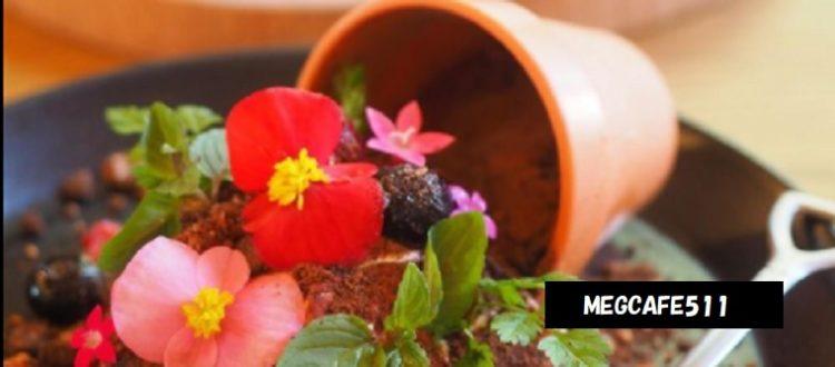 鉢植えお花がキレイなティラミス MEG CAFE 511 新潟県見附市