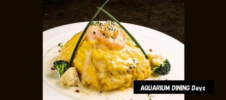 海水魚の水槽があるおしゃれなお店 AQUARIUM DINING Days デートスポット 新潟市中央区花園