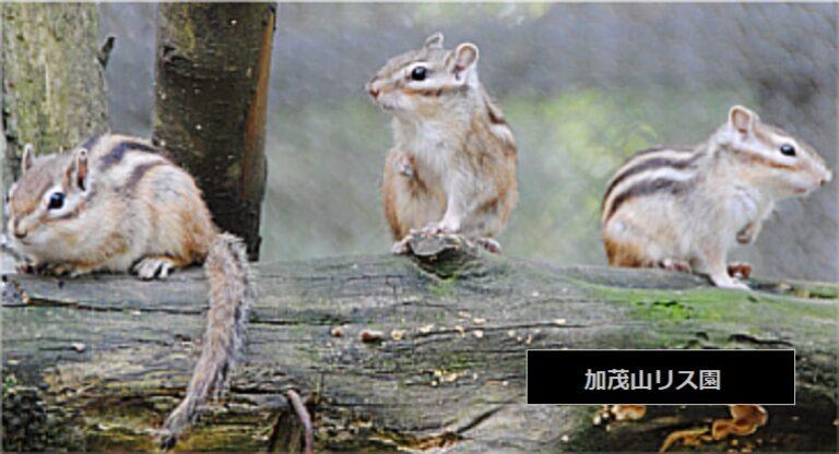 加茂山公園のリス園と大型スライダー、こりすまんじゅう 新潟県加茂市